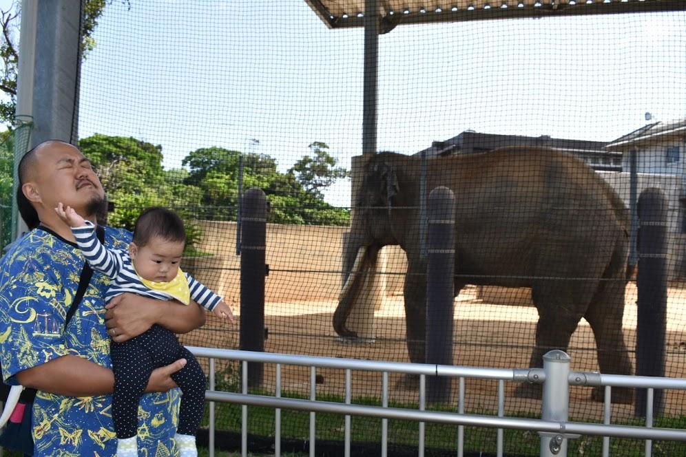 象をみない