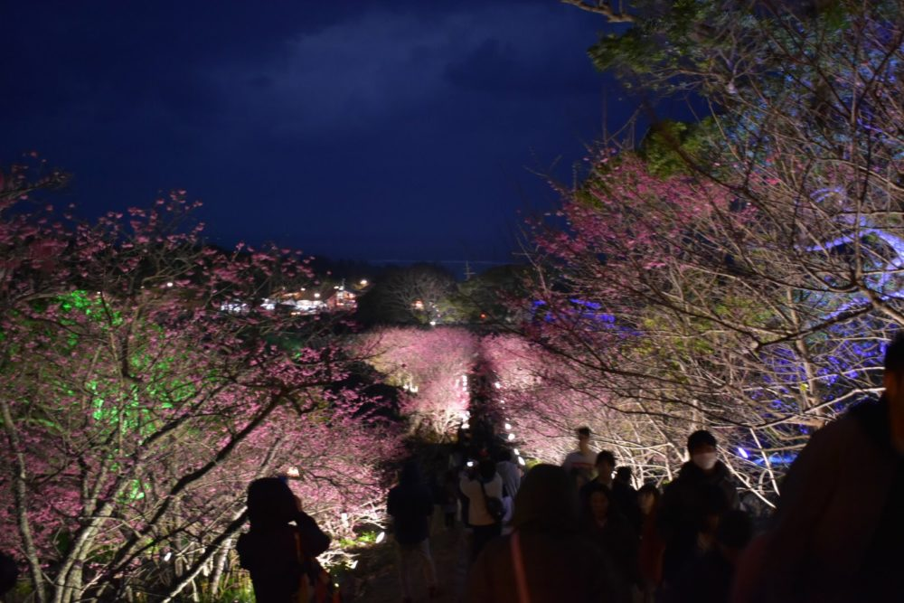 夜桜を楽しむ