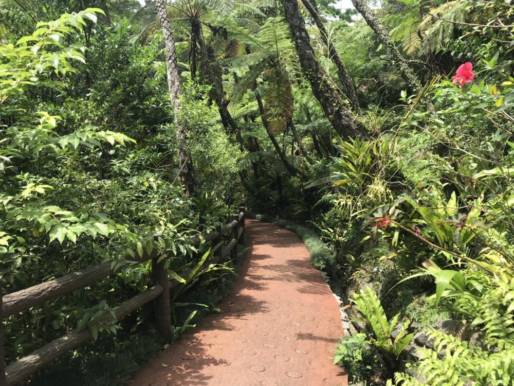 ジャングルを歩くよう